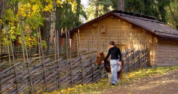 Promenad med hästen på hösten