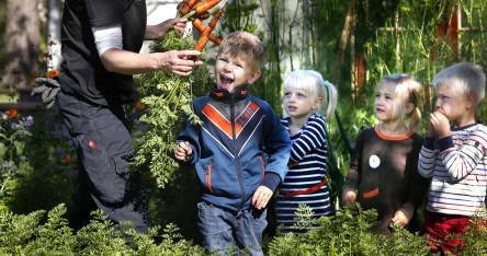 Unga odlare skördar grönskar i Barnens köksträdgård