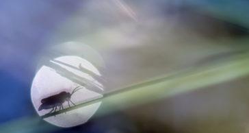 Oskarp oskärpa