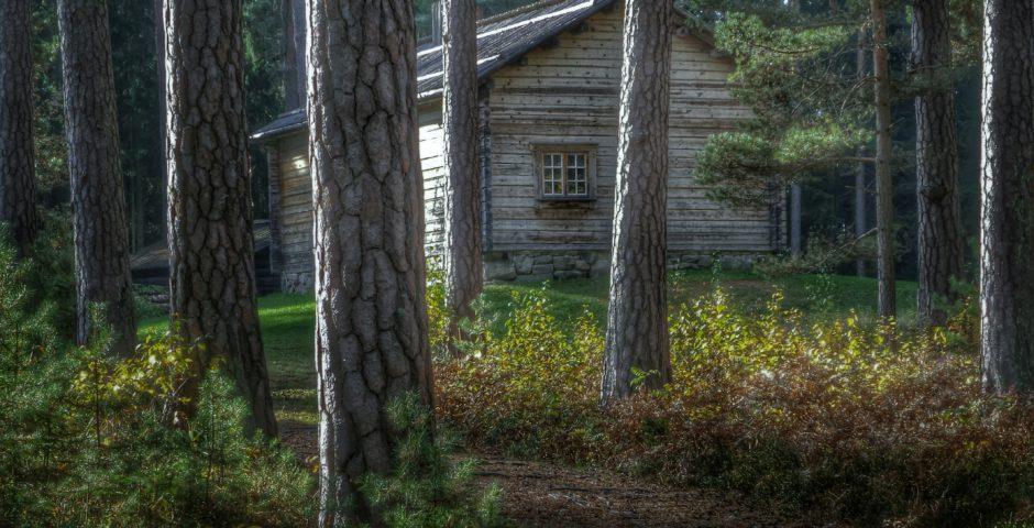 Höst i Mariebergsskogen