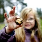 Förskolebarn skördar i Barnens köksträdgård