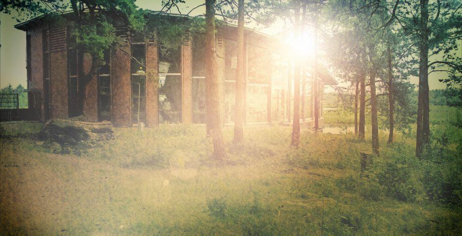 Naturum-huset i tallskogen i motljus.