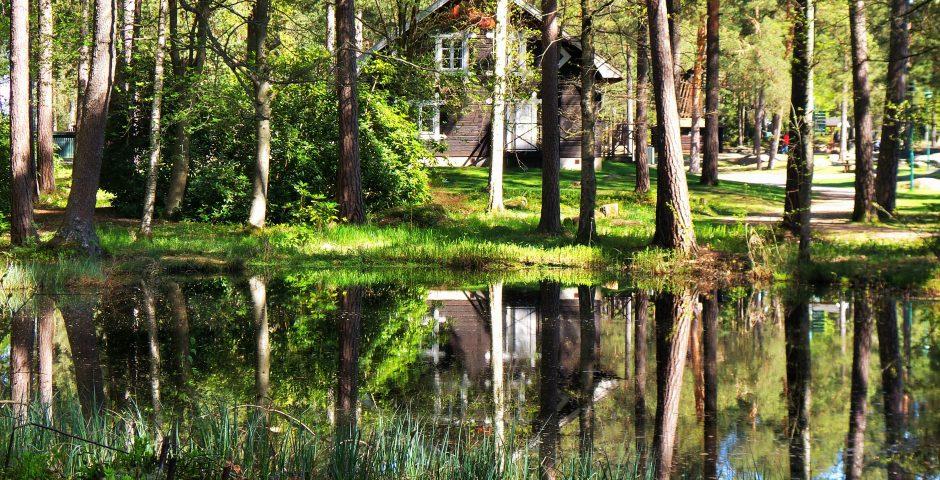 En av dammarna i skogen. Skogen spelgas i vattenytan och i bakgrunden syns den stugliknande Acksjöns kapell.