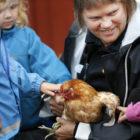 Förskolebarn tittar närmare på en höna, tillsammans med djurvårdare.