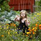 Flicka mitt i färgsprakande blom av ringblommor i Barnens köksträdgård.