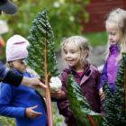 Barn skördar stora mangold i Barnens köksträdgård.
