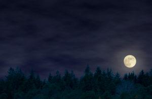 Natt på naturum