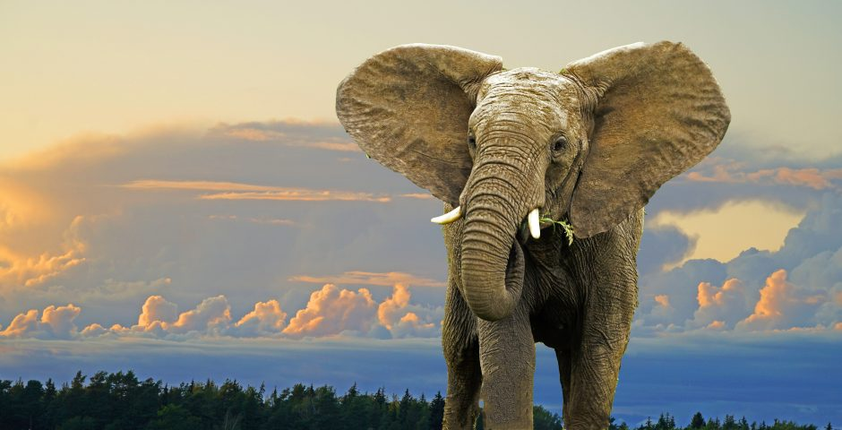 Bild på elefant i skymningen